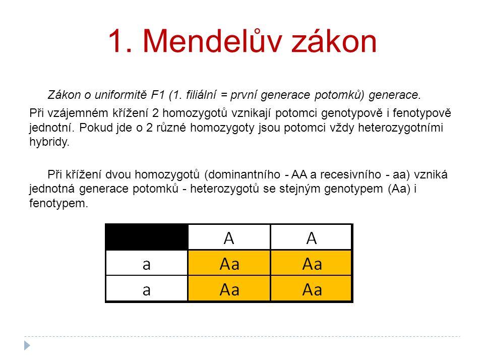 1. Mendelův zákon Zákon o uniformitě F1 (1. filiální = první generace potomků) generace. Při vzájemném křížení 2 homozygotů vznikají potomci genotypov