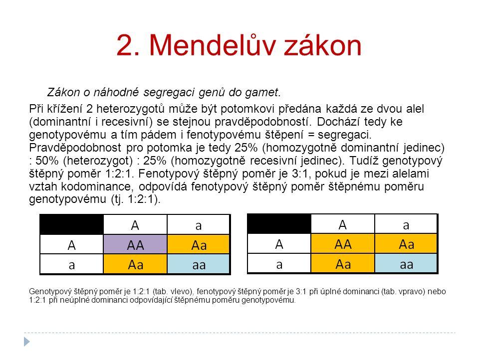 2. Mendelův zákon Zákon o náhodné segregaci genů do gamet. Při křížení 2 heterozygotů může být potomkovi předána každá ze dvou alel (dominantní i rece