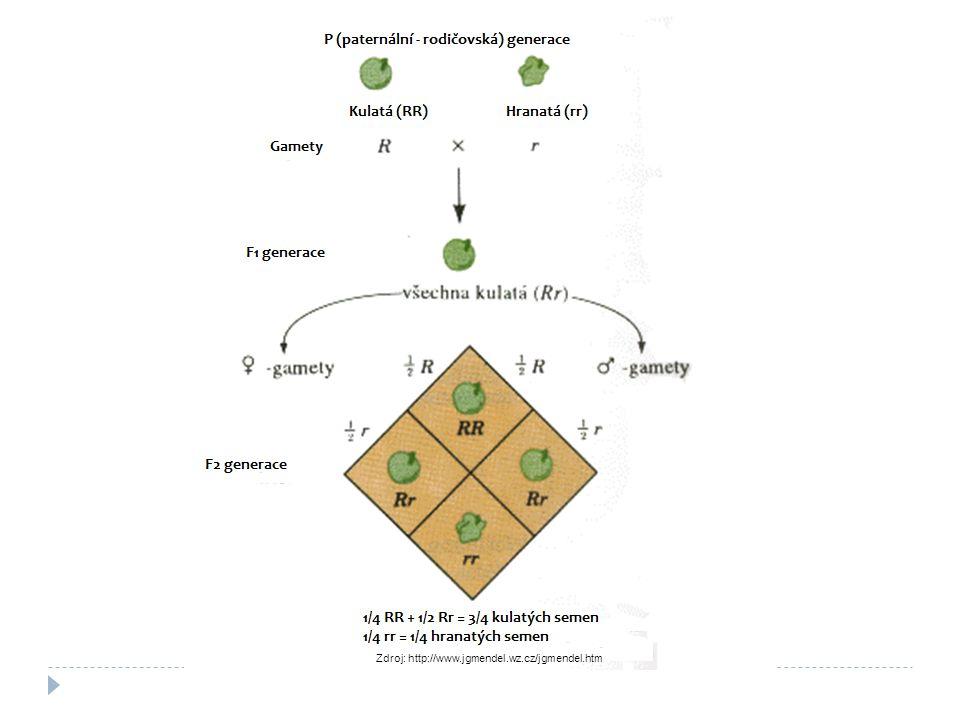 3.Mendelův zákon Zákon o nezávislé kombinovatelnosti alel.