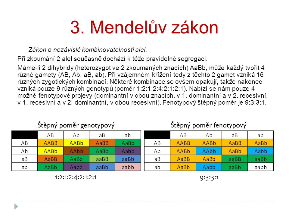 3. Mendelův zákon Zákon o nezávislé kombinovatelnosti alel. Při zkoumání 2 alel současně dochází k téže pravidelné segregaci. Máme-li 2 dihybridy (het