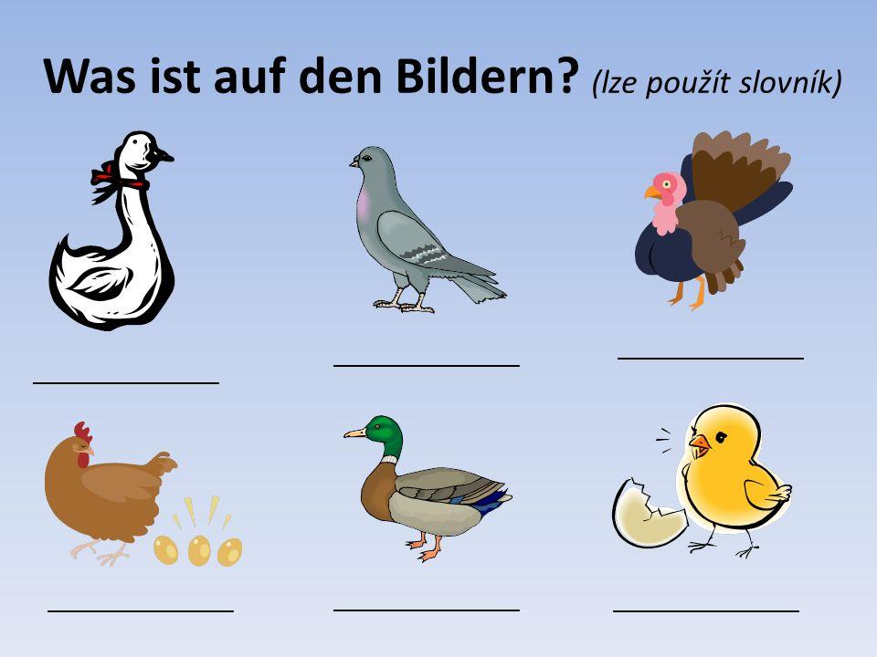 Lösung (řešení) e Gans e Henne, s Huhn e Ente s Huhn, s Hähnchen e Taube r Truthahn