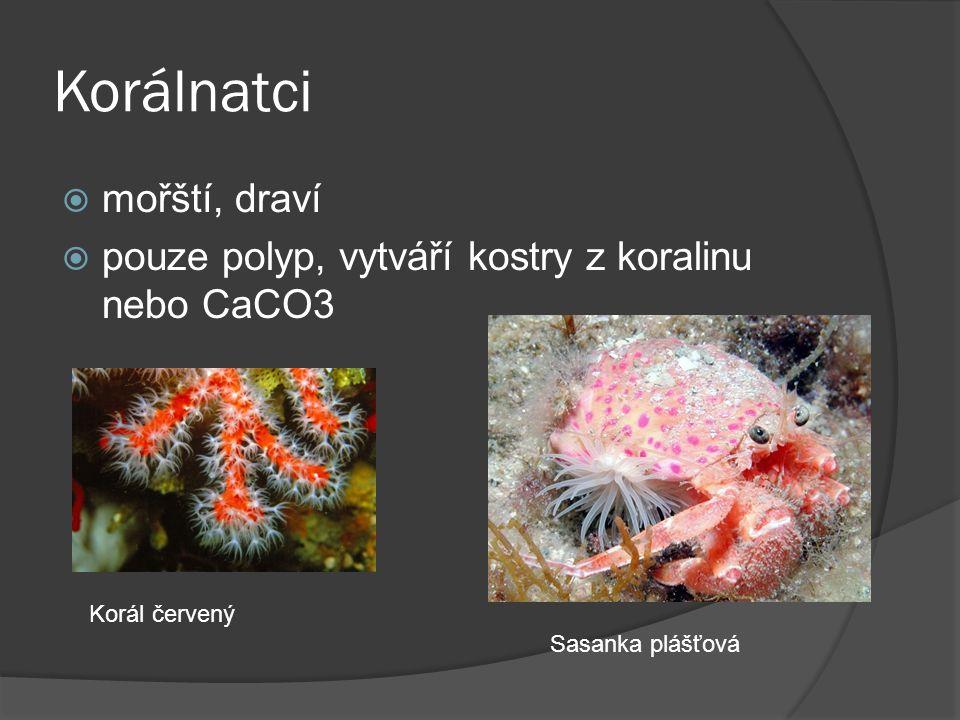 Korálnatci  mořští, draví  pouze polyp, vytváří kostry z koralinu nebo CaCO3 Korál červený Sasanka plášťová