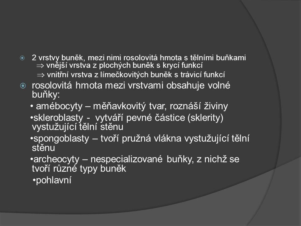 Polypovci  a) nezmaři- celý život polyp, velká schopnost regenerace nezmar hnědý a zelený  b)medúzky – polyp i medúza medúzka sladkovodní  c) trubýši – mořští, tvoří kolonie se společnou láčkou nadnášena plynovým vakem (pneumatoforem) měchýřovka portugalská