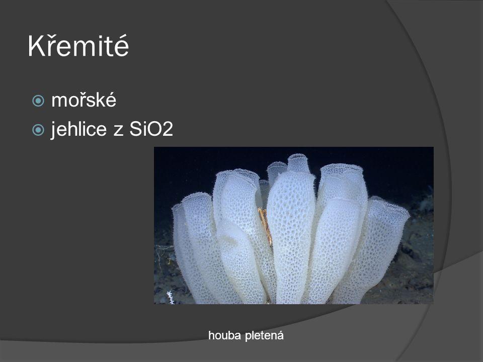 Křemité  mořské  jehlice z SiO2 houba pletená
