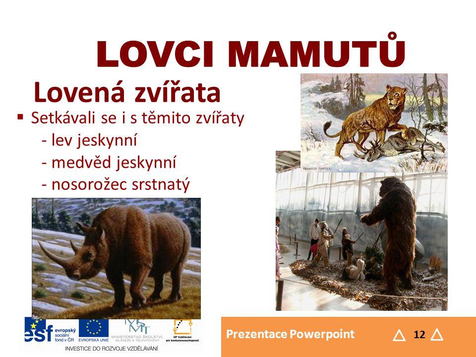 Prezentace Powerpoint 12 LOVCI MAMUTŮ Lovená zvířata LOVCI MAMUTŮ  Setkávali se i s těmito zvířaty - lev jeskynní - medvěd jeskynní - nosorožec srstnatý