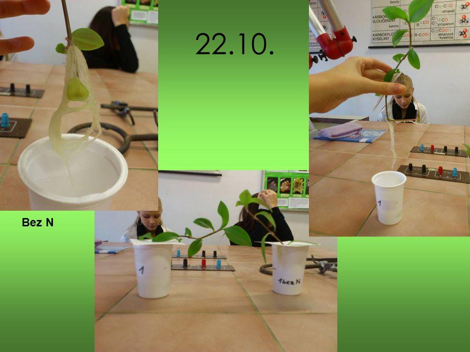 Závěr V této laboratorní práci jsme pozorovaly růst rostliny Voděnky s využitím hydroponie Rostlinka, které chyběla zásobní látka dusík měla větší kořenový systém Rostlinka, která měla všechny zásobní látky byla zelenější a mohly jsme vidět i nově rostoucí listy Během pozorování vyrostly rostlince v roztoku se všemi zásobními látkami 4 nové listy, rostlince v roztoku bez dusíku pouze 3