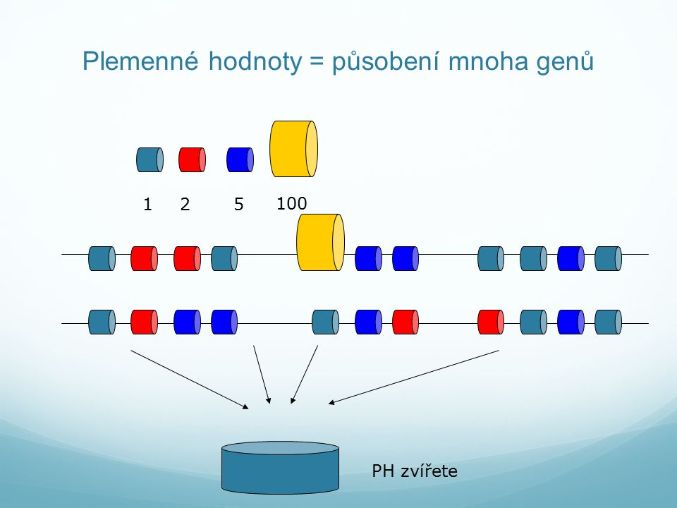 Plemenné hodnoty = působení mnoha genů PH zvířete 125 100