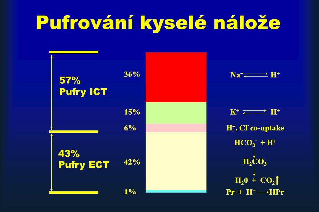 36% 15% 6% 42% 1% Na + H + H +, Cl - co-uptake 57% Pufry ICT 43% Pufry ECT Pr - + H + HPr HCO 3 - + H + H 2 CO 3 H 2 0 + CO 2 K + H + Pufrování kyselé nálože
