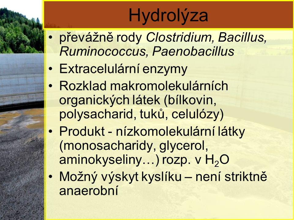 Hydrolýza převážně rody Clostridium, Bacillus, Ruminococcus, Paenobacillus Extracelulární enzymy Rozklad makromolekulárních organických látek (bílkovin, polysacharid, tuků, celulózy) Produkt - nízkomolekulární látky (monosacharidy, glycerol, aminokyseliny…) rozp.