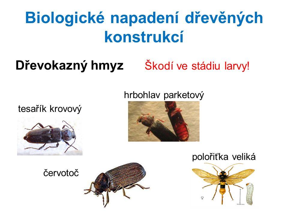Biologické napadení dřevěných konstrukcí Dřevokazný hmyz Škodí ve stádiu larvy.