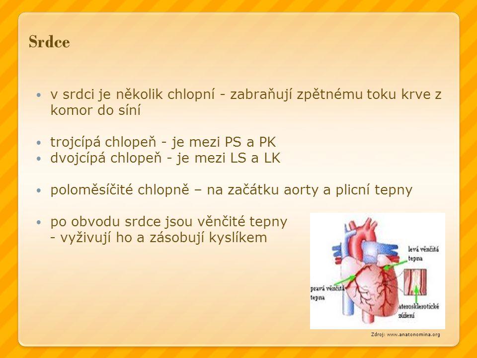 Srdce v srdci je několik chlopní - zabraňují zpětnému toku krve z komor do síní trojcípá chlopeň - je mezi PS a PK dvojcípá chlopeň - je mezi LS a LK poloměsíčité chlopně – na začátku aorty a plicní tepny po obvodu srdce jsou věnčité tepny - vyživují ho a zásobují kyslíkem Zdroj: www.anatonomina.org