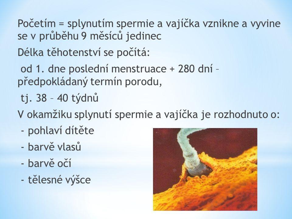 Početím = splynutím spermie a vajíčka vznikne a vyvine se v průběhu 9 měsíců jedinec Délka těhotenství se počítá: od 1.