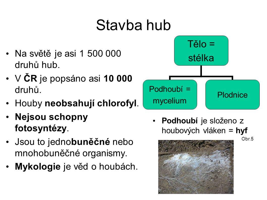 Stavba hub Na světě je asi 1 500 000 druhů hub. V ČR je popsáno asi 10 000 druhů.