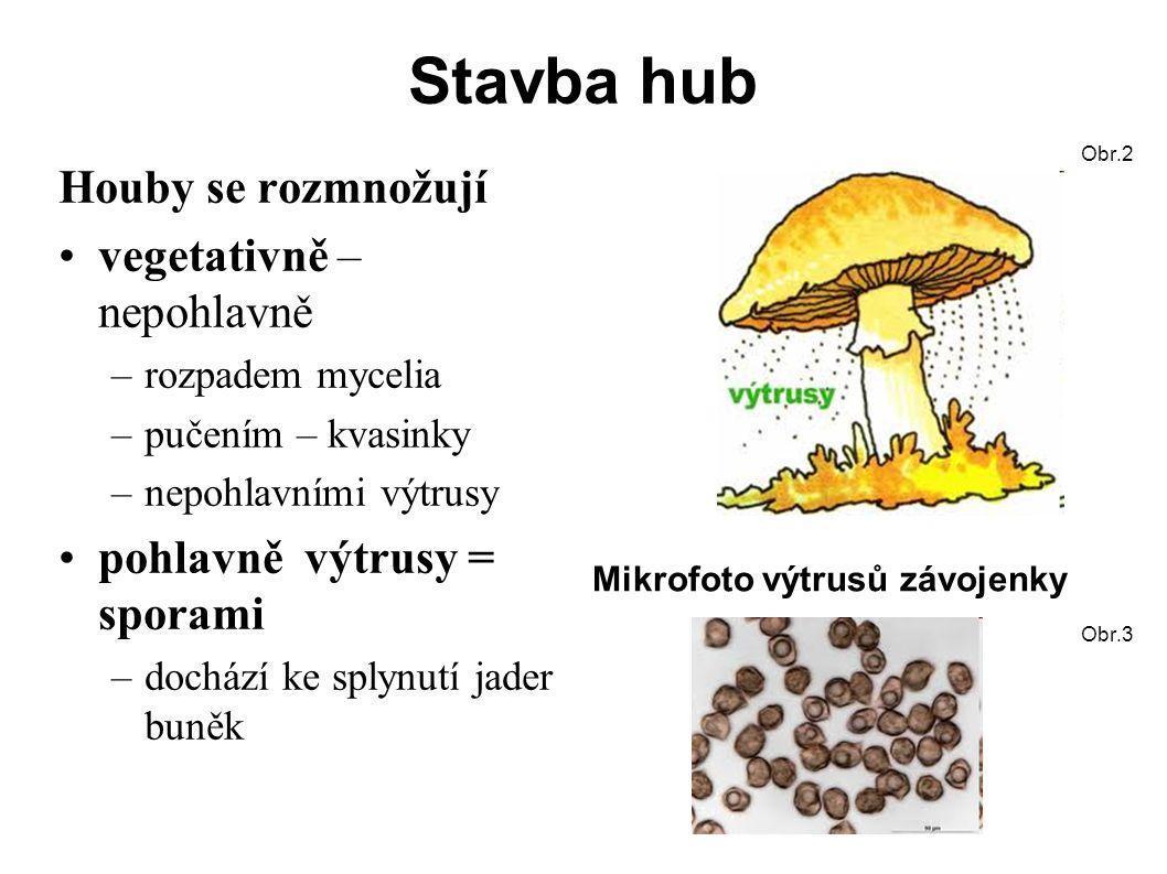 Stavba hub Houby se rozmnožují vegetativně – nepohlavně –rozpadem mycelia –pučením – kvasinky –nepohlavními výtrusy pohlavně výtrusy = sporami –dochází ke splynutí jader buněk Obr.2 Mikrofoto výtrusů závojenky Obr.3