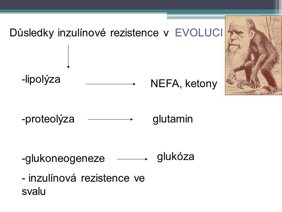 Důsledky inzulínové rezistence v EVOLUCI -lipolýza -proteolýza -glukoneogeneze - inzulínová rezistence ve svalu NEFA, ketony glukóza glutamin