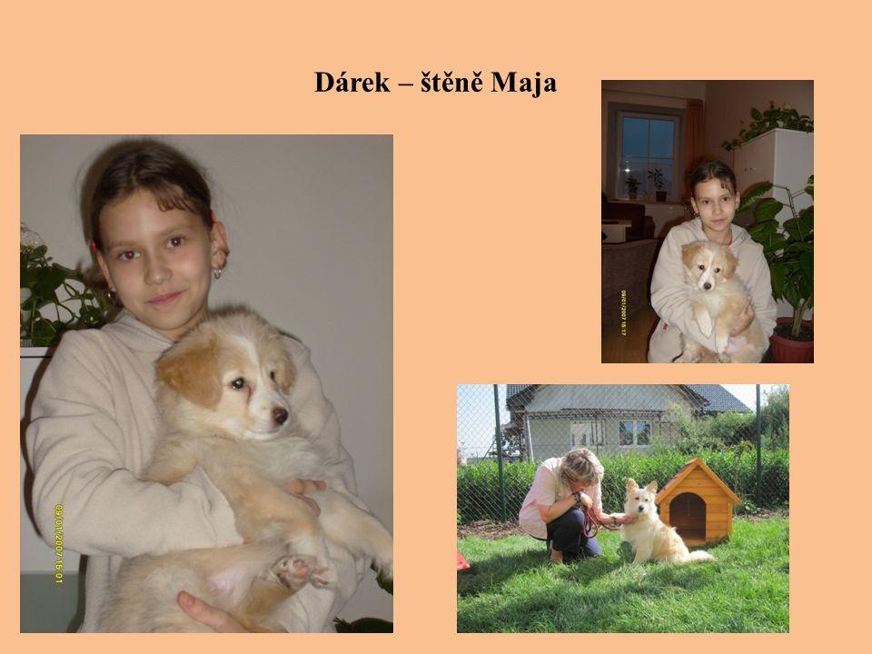 Dárek – štěně Maja