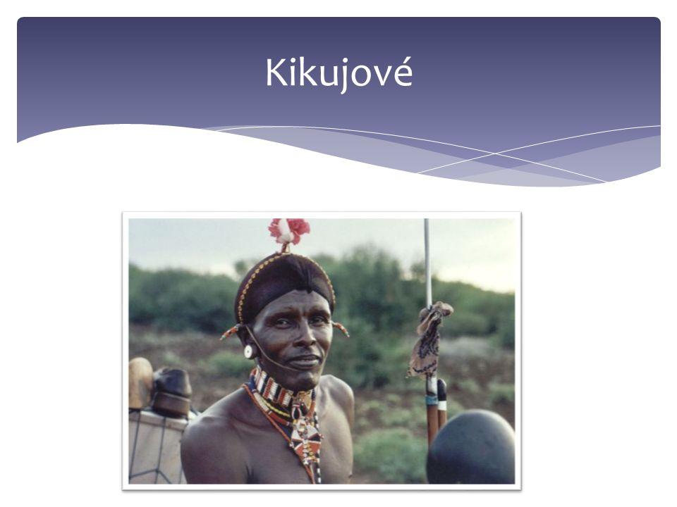Kikujové