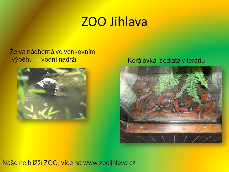 """ZOO Jihlava Želva nádherná ve venkovním """"výběhu – vodní nádrži Korálovka sedlatá v teráriu Naše nejbližší ZOO, více na www.zoojihlava.cz"""