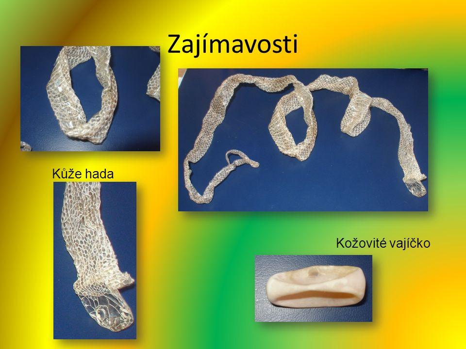 Zajímavosti Kůže hada Kožovité vajíčko