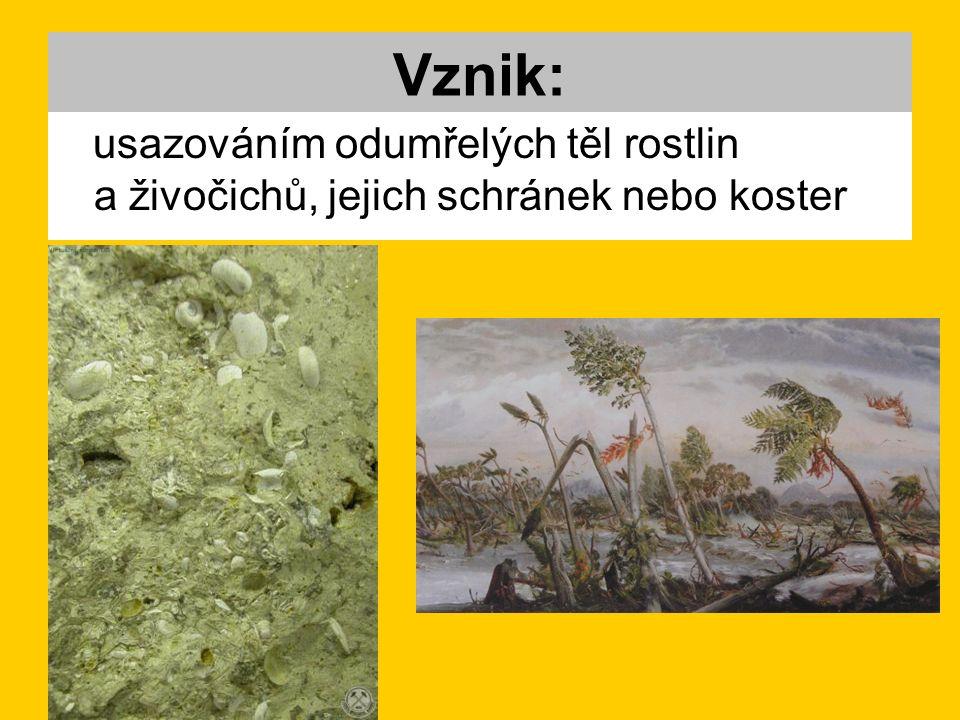 Vznik: usazováním odumřelých těl rostlin a živočichů, jejich schránek nebo koster