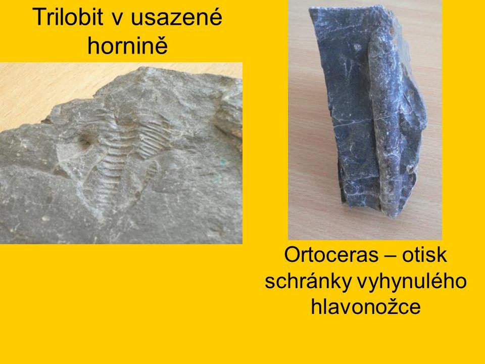 Trilobit v usazené hornině Ortoceras – otisk schránky vyhynulého hlavonožce