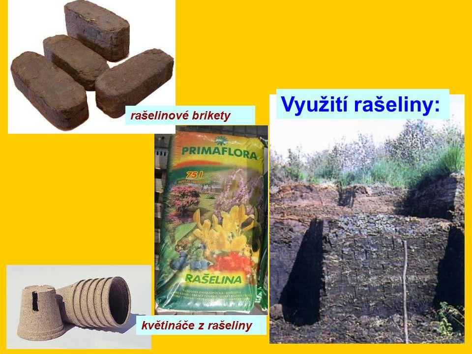 Využití rašeliny: květináče z rašeliny rašelinové brikety