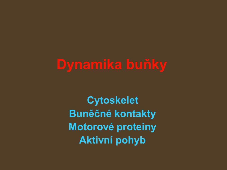 Dynamika buňky Cytoskelet Buněčné kontakty Motorové proteiny Aktivní pohyb