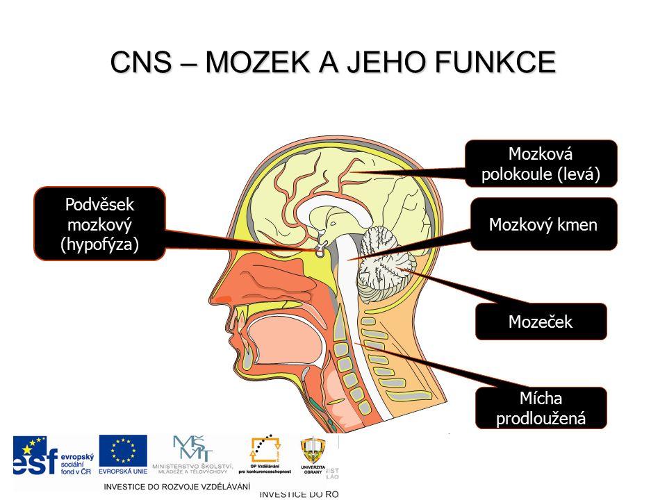 CNS – MOZEK A JEHO FUNKCE Podvěsek mozkový (hypofýza) Mozkový kmen Mozková polokoule (levá) Mozeček Mícha prodloužená