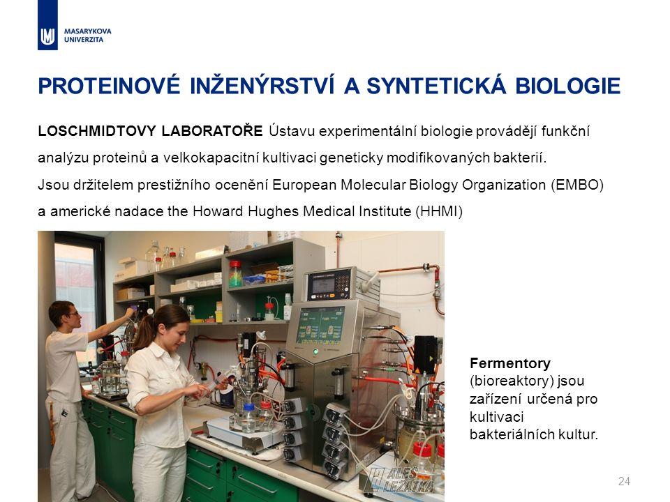 PROTEINOVÉ INŽENÝRSTVÍ A SYNTETICKÁ BIOLOGIE www.muni.cz24 LOSCHMIDTOVY LABORATOŘE Ústavu experimentální biologie provádějí funkční analýzu proteinů a velkokapacitní kultivaci geneticky modifikovaných bakterií.
