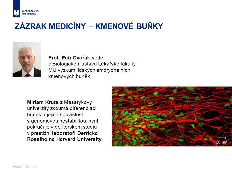 Miriam Krutá z Masarykovy univerzity zkoumá diferenciaci buněk a jejich souvislost s genomovou nestabilitou, nyní pokračuje v doktorském studiu v prestižní laboratoři Derricka Rossiho na Harvard University.
