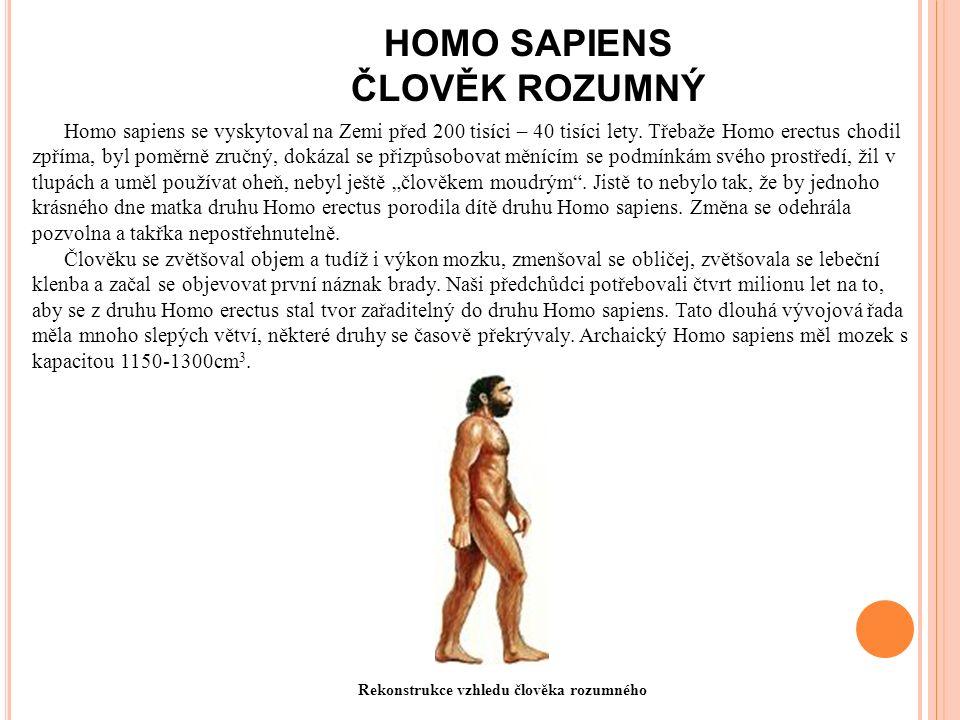 HOMO SAPIENS ČLOVĚK ROZUMNÝ Homo sapiens se vyskytoval na Zemi před 200 tisíci – 40 tisíci lety.