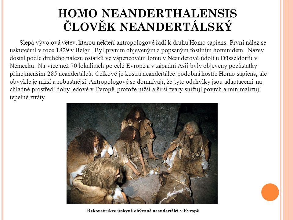 HOMO NEANDERTHALENSIS ČLOVĚK NEANDERTÁLSKÝ Slepá vývojová větev, kterou někteří antropologové řadí k druhu Homo sapiens.