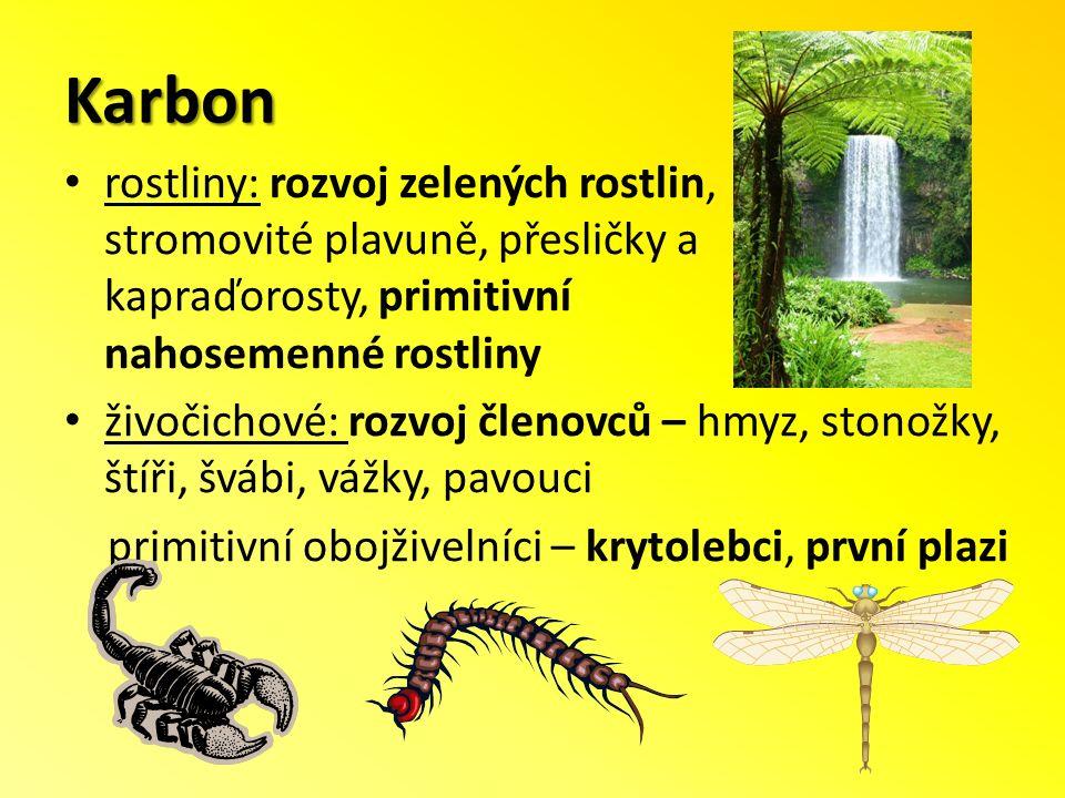 Karbon rostliny: rozvoj zelených rostlin, stromovité plavuně, přesličky a kapraďorosty, primitivní nahosemenné rostliny živočichové: rozvoj členovců – hmyz, stonožky, štíři, švábi, vážky, pavouci primitivní obojživelníci – krytolebci, první plazi