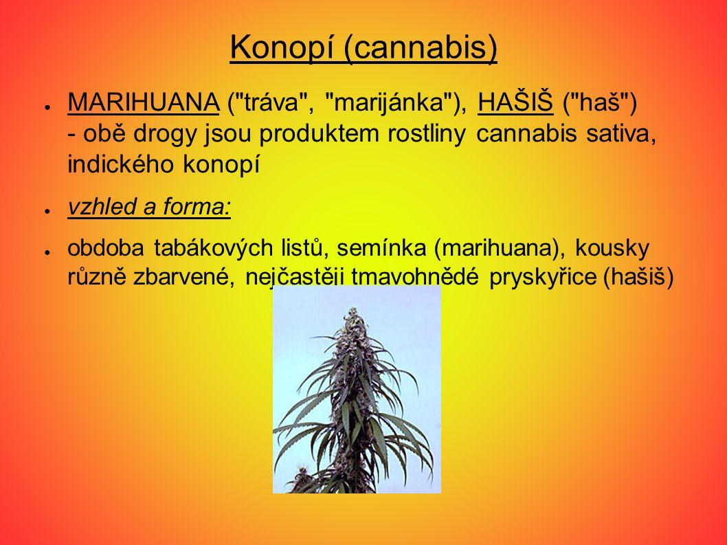 Konopí (cannabis) ● MARIHUANA ( tráva , marijánka ), HAŠIŠ ( haš ) - obě drogy jsou produktem rostliny cannabis sativa, indického konopí ● vzhled a forma: ● obdoba tabákových listů, semínka (marihuana), kousky různě zbarvené, nejčastěji tmavohnědé pryskyřice (hašiš)