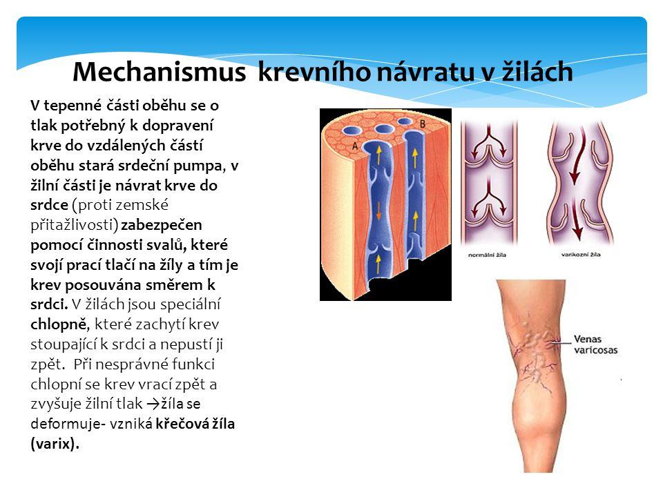 V tepenné části oběhu se o tlak potřebný k dopravení krve do vzdálených částí oběhu stará srdeční pumpa, v žilní části je návrat krve do srdce (proti zemské přitažlivosti) zabezpečen pomocí činnosti svalů, které svojí prací tlačí na žíly a tím je krev posouvána směrem k srdci.