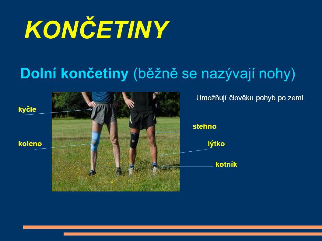 KONČETINY Dolní končetiny (běžně se nazývají nohy) Umožňují člověku pohyb po zemi.