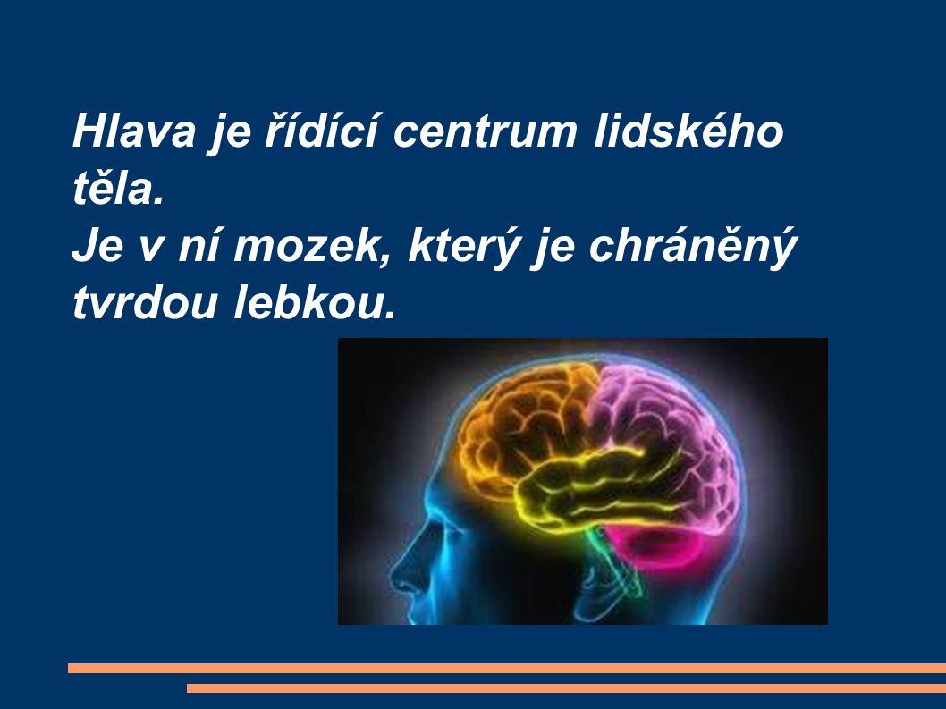 Hlava je řídící centrum lidského těla. Je v ní mozek, který je chráněný tvrdou lebkou.