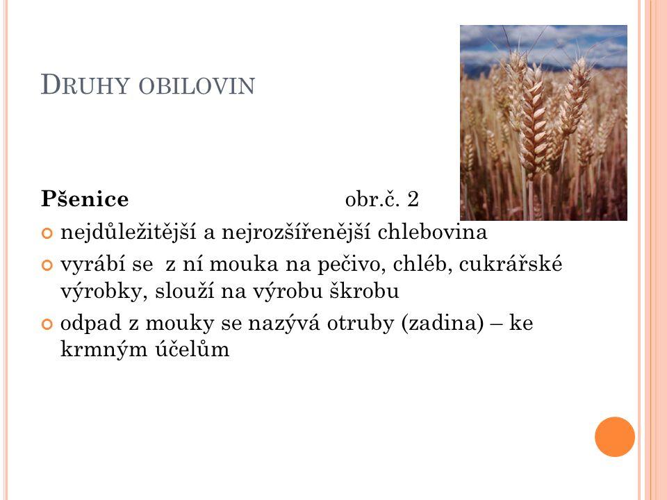 D RUHY OBILOVIN Pšenice obr.č.