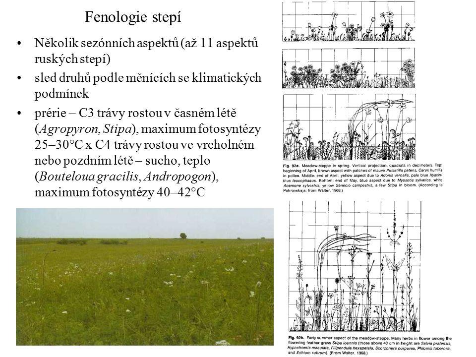 Fenologie stepí Několik sezónních aspektů (až 11 aspektů ruských stepí) sled druhů podle měnících se klimatických podmínek prérie – C3 trávy rostou v časném létě (Agropyron, Stipa), maximum fotosyntézy 25–30°C x C4 trávy rostou ve vrcholném nebo pozdním létě – sucho, teplo (Bouteloua gracilis, Andropogon), maximum fotosyntézy 40–42°C