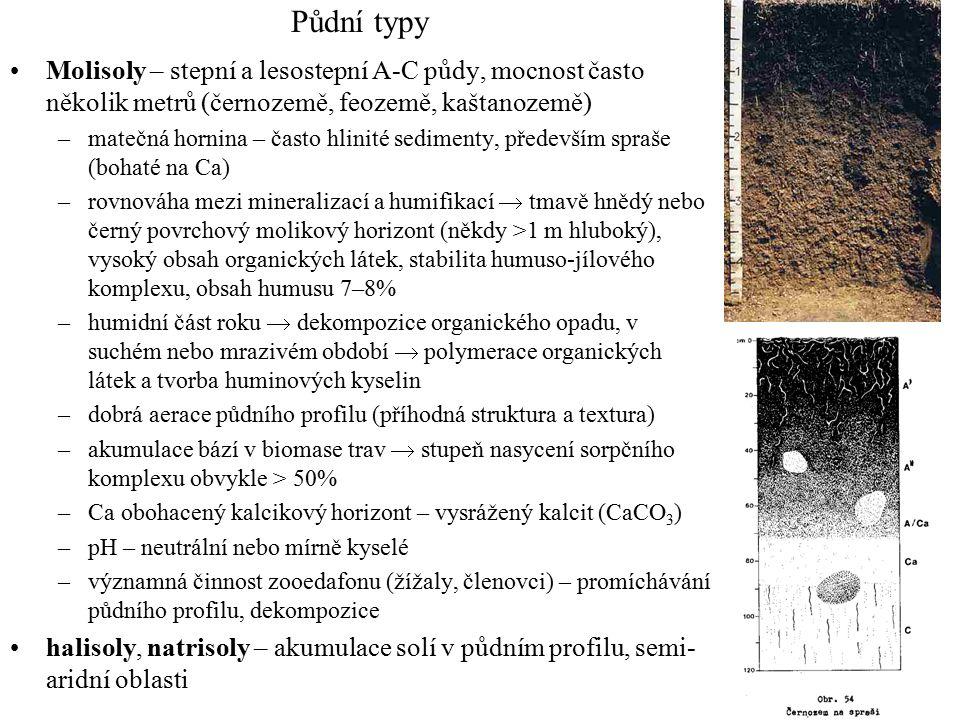 Půdní typy Molisoly – stepní a lesostepní A-C půdy, mocnost často několik metrů (černozemě, feozemě, kaštanozemě) –matečná hornina – často hlinité sedimenty, především spraše (bohaté na Ca) –rovnováha mezi mineralizací a humifikací  tmavě hnědý nebo černý povrchový molikový horizont (někdy >1 m hluboký), vysoký obsah organických látek, stabilita humuso-jílového komplexu, obsah humusu 7–8% –humidní část roku  dekompozice organického opadu, v suchém nebo mrazivém období  polymerace organických látek a tvorba huminových kyselin –dobrá aerace půdního profilu (příhodná struktura a textura) –akumulace bází v biomase trav  stupeň nasycení sorpčního komplexu obvykle > 50% –Ca obohacený kalcikový horizont – vysrážený kalcit (CaCO 3 ) –pH – neutrální nebo mírně kyselé –významná činnost zooedafonu (žížaly, členovci) – promíchávání půdního profilu, dekompozice halisoly, natrisoly – akumulace solí v půdním profilu, semi- aridní oblasti