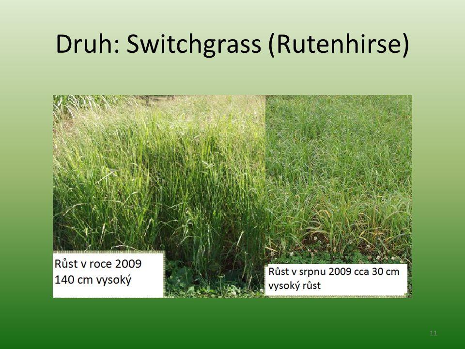 Druh: Switchgrass (Rutenhirse) 11