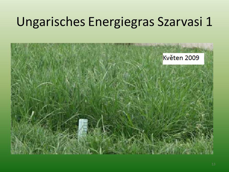Ungarisches Energiegras Szarvasi 1 13