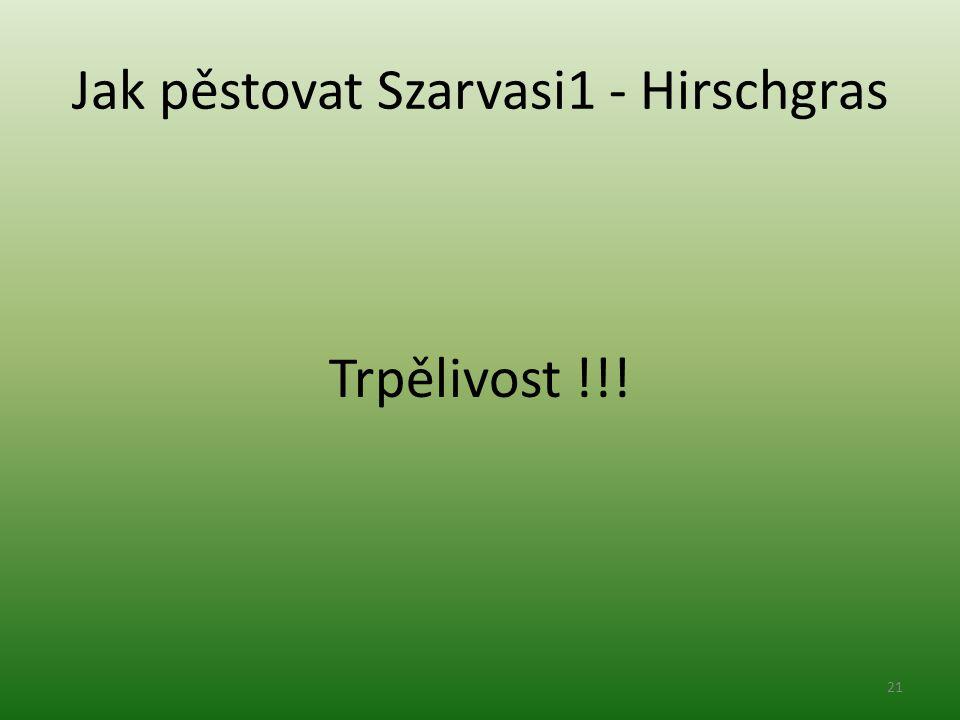 Jak pěstovat Szarvasi1 - Hirschgras Trpělivost !!! 21