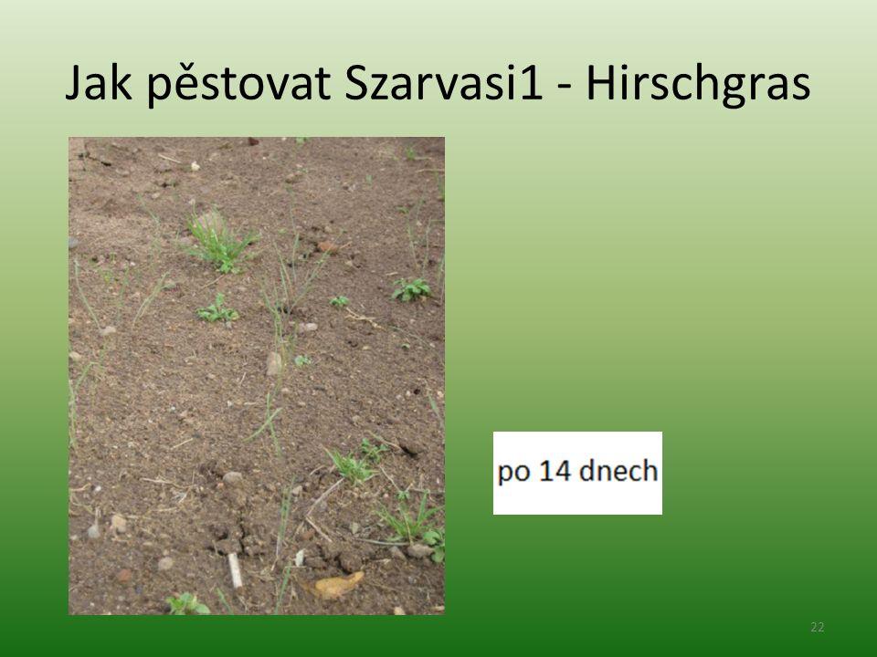 Jak pěstovat Szarvasi1 - Hirschgras 22