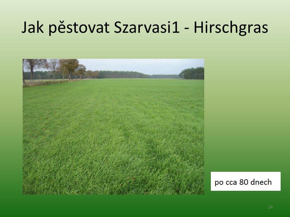 Jak pěstovat Szarvasi1 - Hirschgras 24