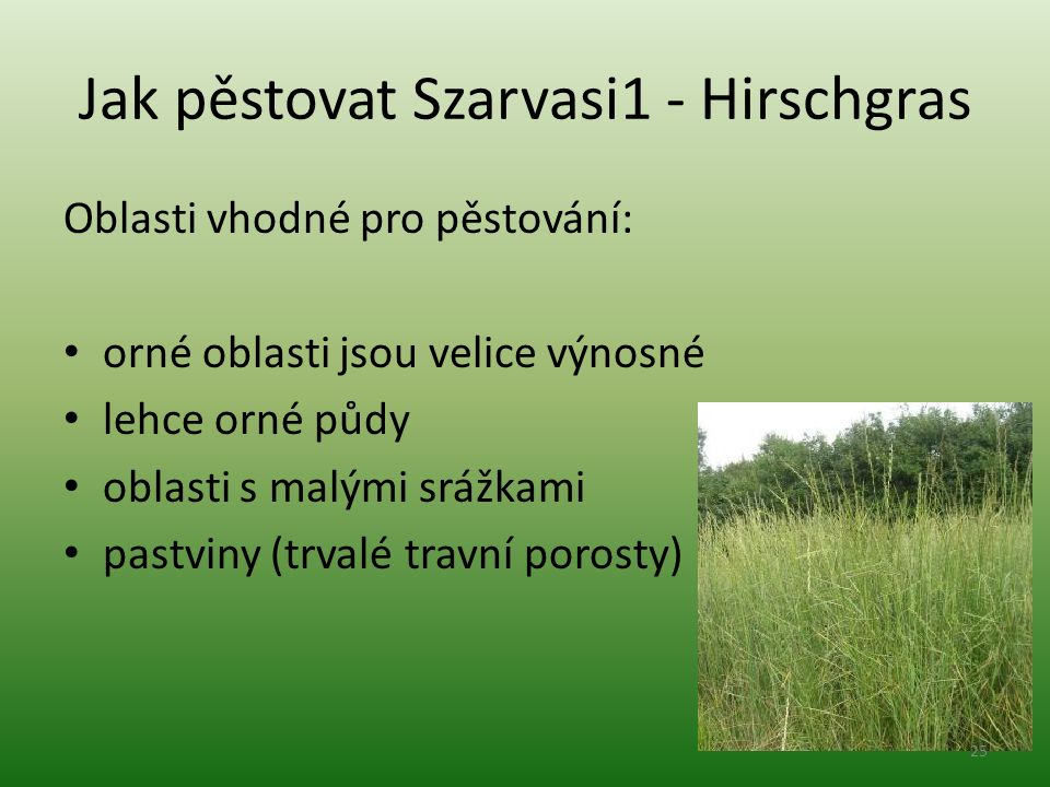 Jak pěstovat Szarvasi1 - Hirschgras Oblasti vhodné pro pěstování: orné oblasti jsou velice výnosné lehce orné půdy oblasti s malými srážkami pastviny