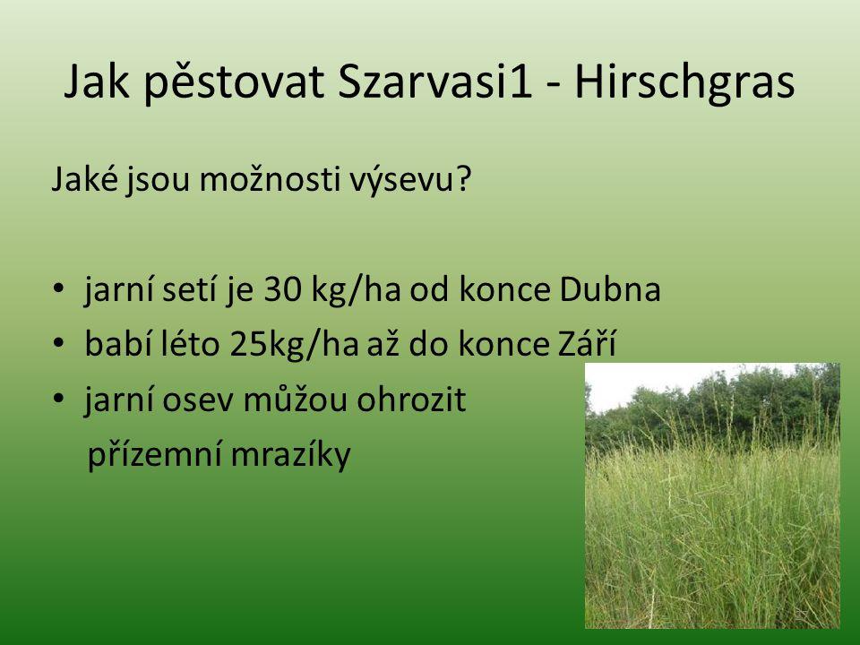 Jak pěstovat Szarvasi1 - Hirschgras Jaké jsou možnosti výsevu? jarní setí je 30 kg/ha od konce Dubna babí léto 25kg/ha až do konce Září jarní osev můž