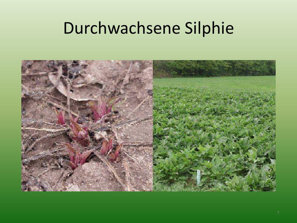 Jak pěstovat Szarvasi1 - Hirschgras Kdy a jak hnojit.
