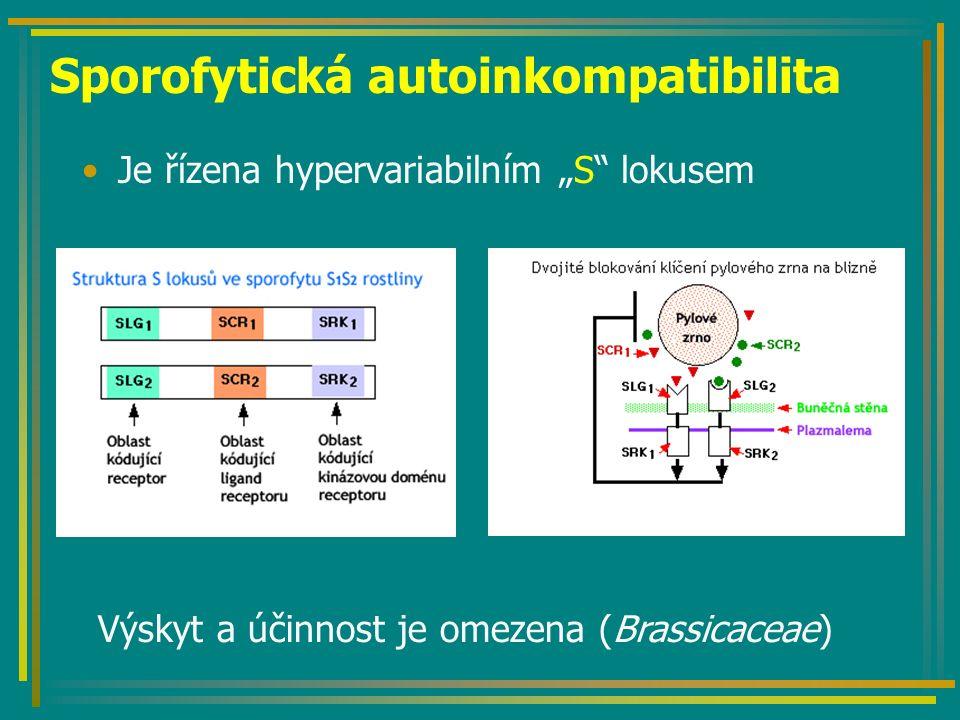 """Sporofytická autoinkompatibilita Je řízena hypervariabilním """"S"""" lokusem Výskyt a účinnost je omezena (Brassicaceae)"""