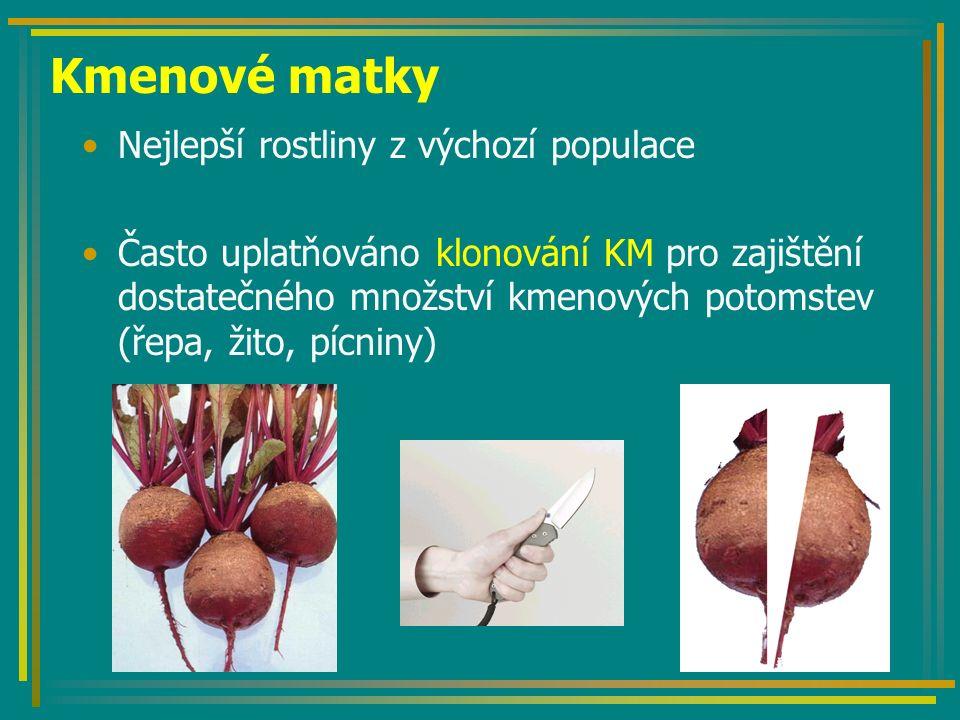 Kmenové matky Nejlepší rostliny z výchozí populace Často uplatňováno klonování KM pro zajištění dostatečného množství kmenových potomstev (řepa, žito,
